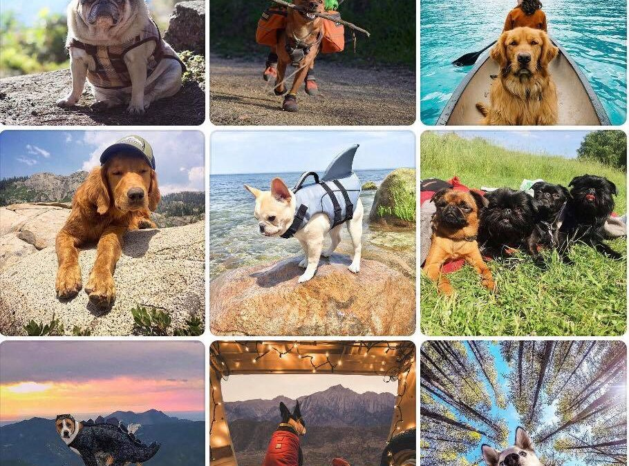 TEN TIPS FOR HIKING WITH DOGS