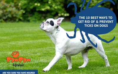 The 10 Best Ways to Get Rid of & Prevent Ticks on Dogs