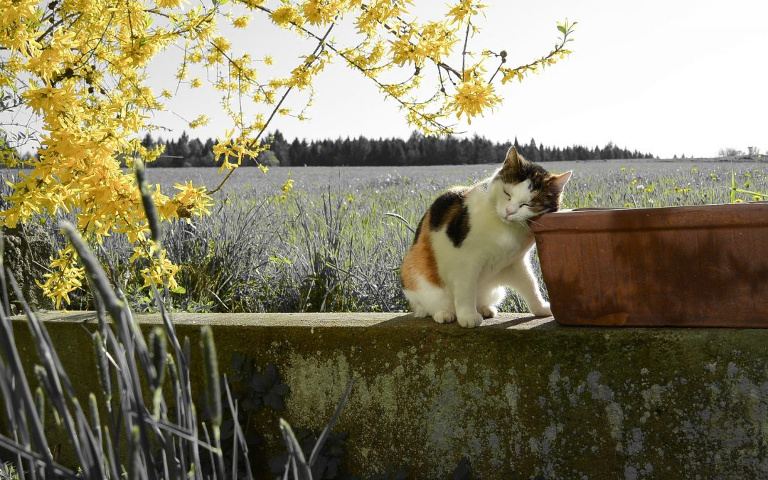 6 SIGNS YOUR CAT HAS SPRING FEVER