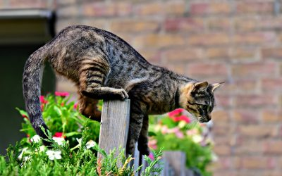 Insects that can harm your cat