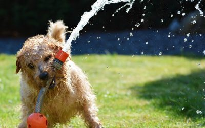 Protect your pets in the heat this Summer