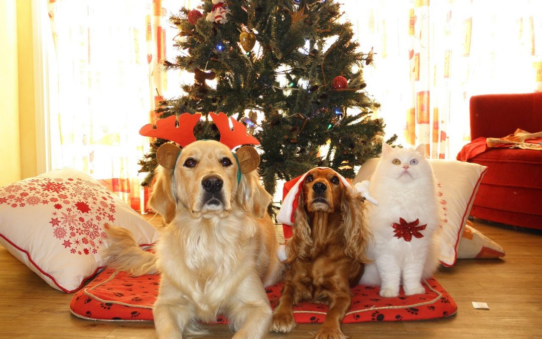 Christmas Tree and Holiday safety for pets