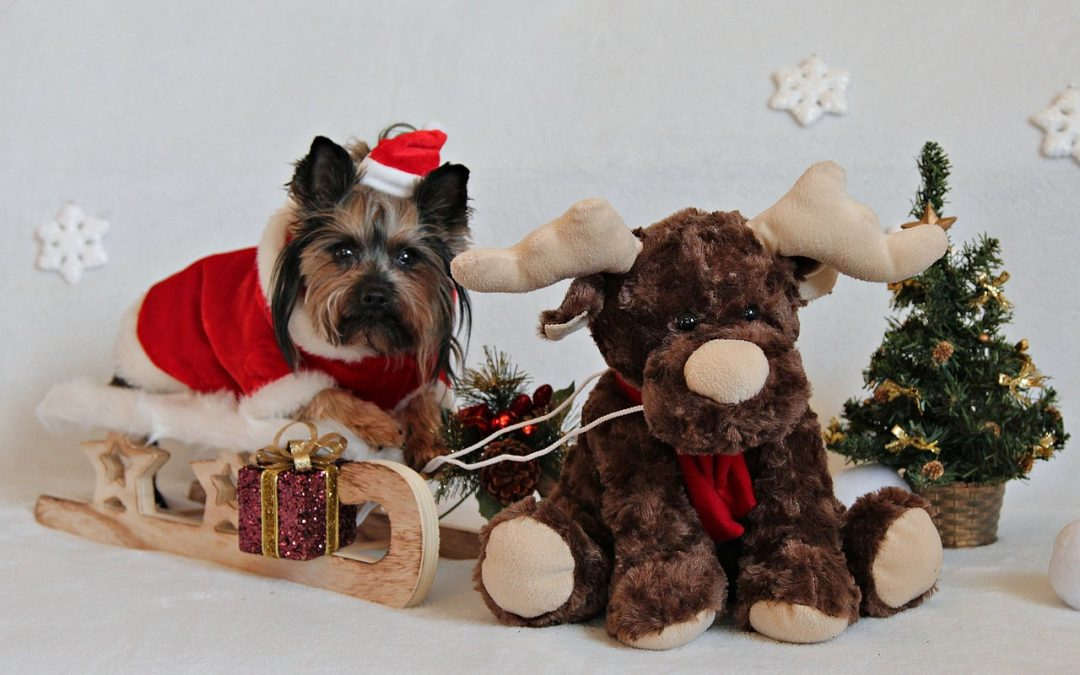 5 REASONS TO LOVE CHRISTMAS WITH PETS
