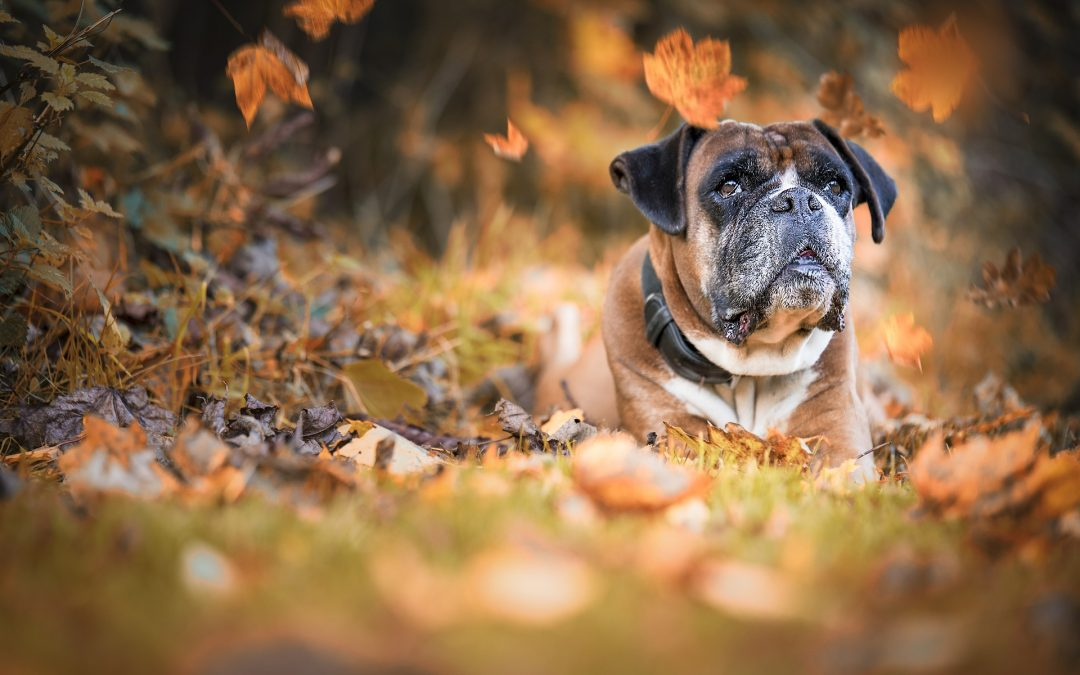 Dogs In Autumn – 8 Things To Avoid!