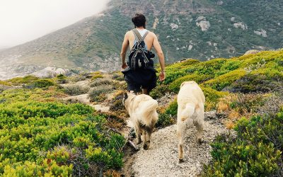 9 pet-friendly hikes and walking trails