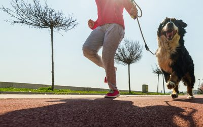 5 reasons why your dog makes the perfect workout partner