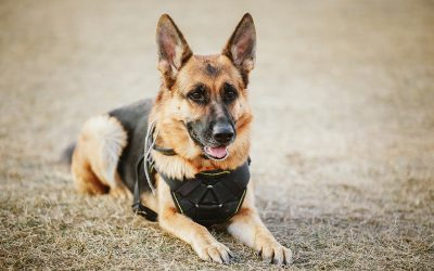 Let's talk about Service Dogs
