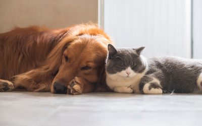 The Cost of Pet Care