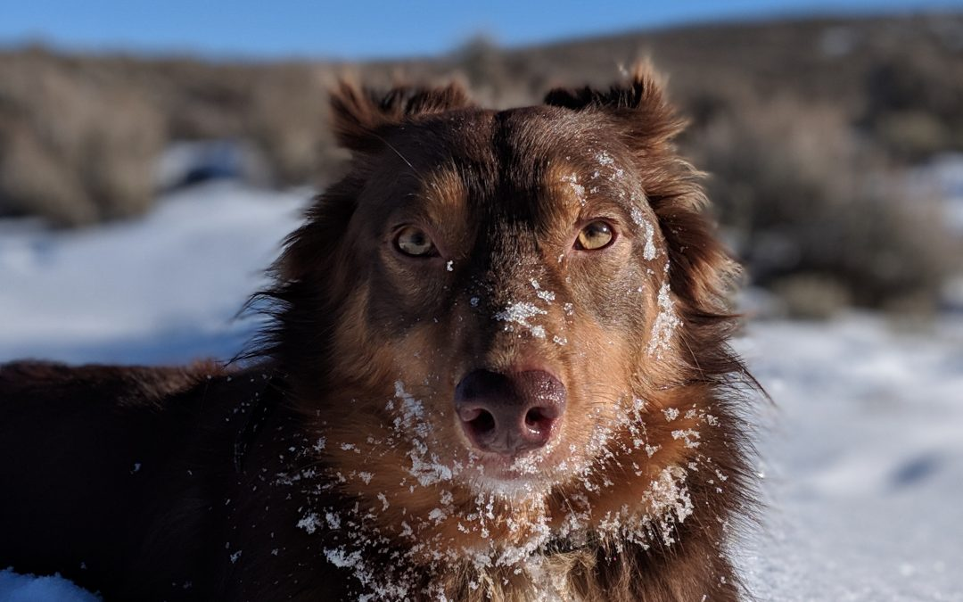 Ice Cubes and Frozen Items for dogs?