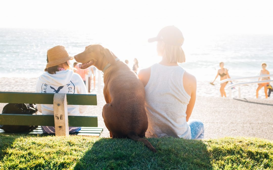 It's getting hot in here! Top 10 SUMMER SAFETY HINTS
