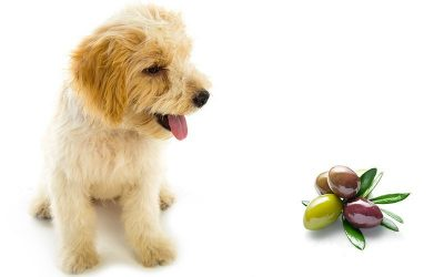 Ever wondered if dogs can eat olives?